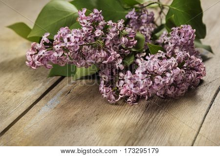 The branch of a lilac on a wooden surface