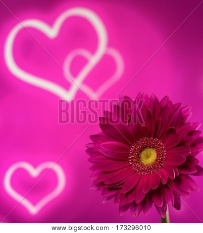 Beautiful purple gerbera on a bright purple background with hearts