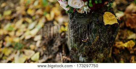 Golden Wedding Rings At Stump On Autumn Forest With Bouquet.