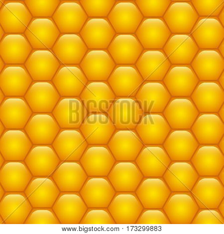Honeycombs with honey. Background texture. Vector Image