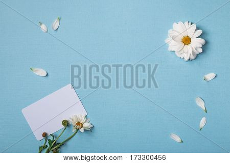 Spring top view composition: business / credit / visiting card mockup scattered petals around white flowers with green stem and yellow heart. Sky blue background with copy space for text. Flat lay.