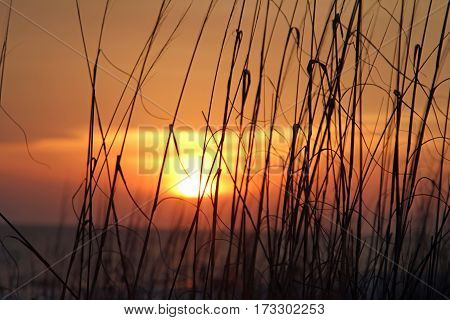 sea oats in the sunset at Mexico Beach Florida