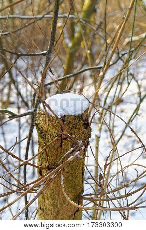 snow on the cut tree trunk closeup