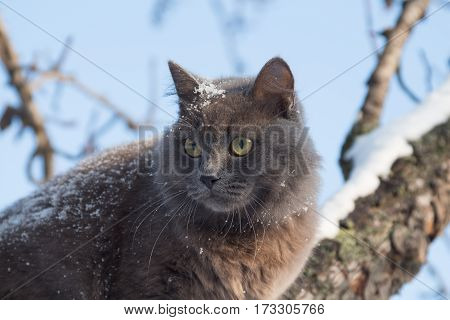 Portrait Of Fluffy Gray Cat On A Tree With Snow