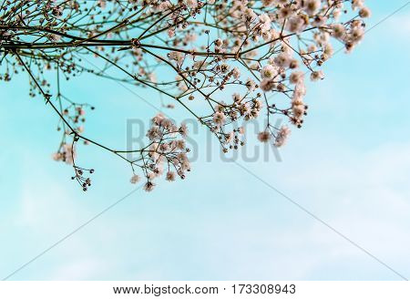 Soft blue sky background and branches of white spring flowers.