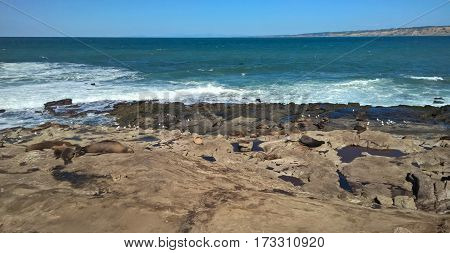 Seals taking it easy on the beach of La Jolla Cove.