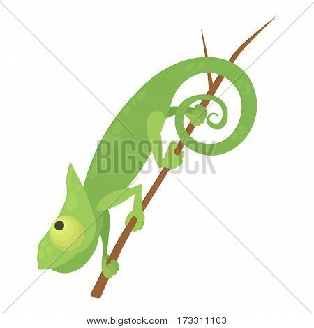 Walking chameleon icon. Cartoon illustration of walking chameleon vector icon for web