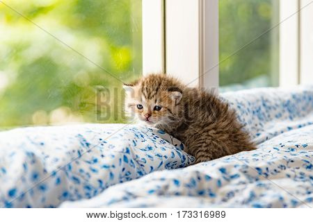 Close up of cute kitten sit near window and waitting in cat cafe Tokyo Japan