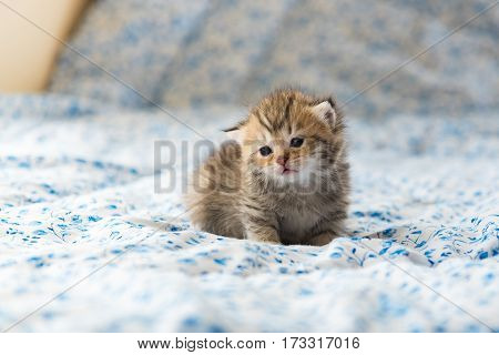 Close up of cute lonely kitten sit alone on the bed in the morning.