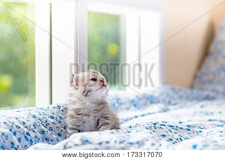 Close up of cute kitten sitting near window and waiting in cat cafe Tokyo Japan