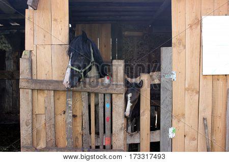 animals foal farm horse ranch mammal barn mare rural head summer