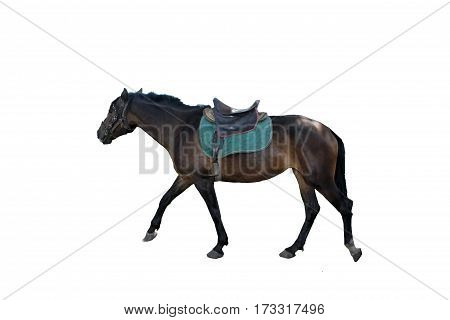 horse backgrounds isolated  white stallion  motion herbivorous livestock beauty