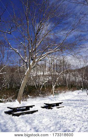 Snow And Bench In The Walkway Forest Noboribetsu Onsen