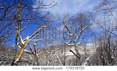 Snow And Forest With Bluesky Noboribetsu Onsen