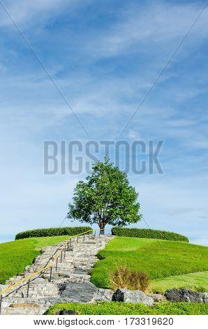 A tree at Royal Park Rajapruek(Royal Flora Park) the landmark public park in chiangmai Thailand.
