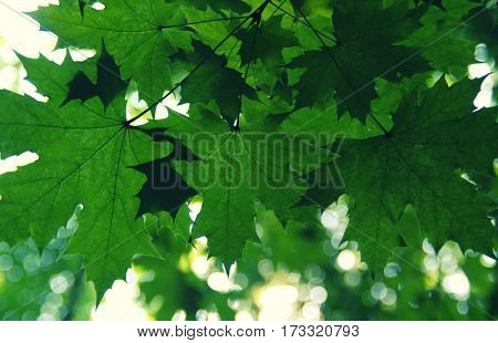 Green leaves on the green bokeh backgrounds