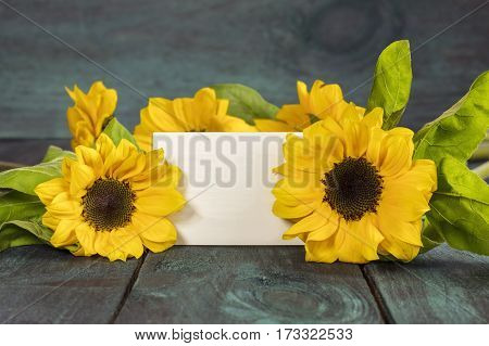 Shiny yellow sunflowers with green leaves on a dark wooden boards texture, with a blank card for copy space. Selective focus