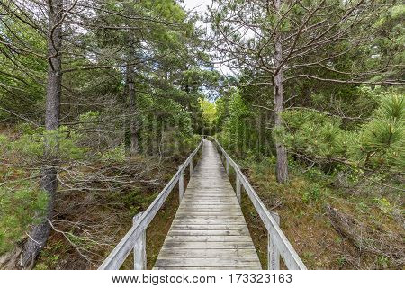Boardwalk Through Oak Savanna - Pinery Provincial Park, Ontario, Canada