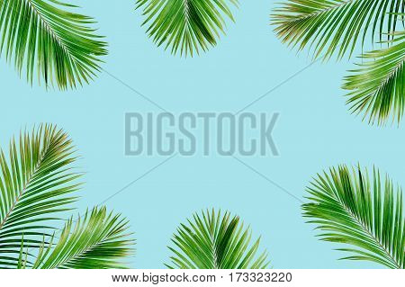 Tropical exotic palm branches frame isolated on blue background. Flat lay top view mockup.