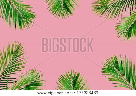 Tropical exotic palm branches frame isolated on pink background. Flat lay top view mockup.