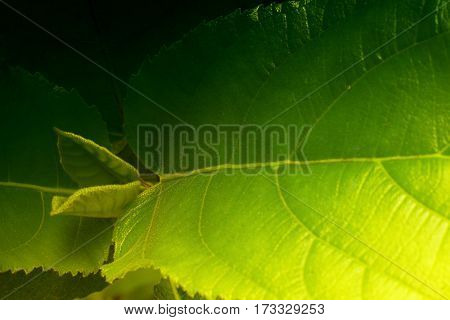 Green leaves texture of nature stock photograph with natural background