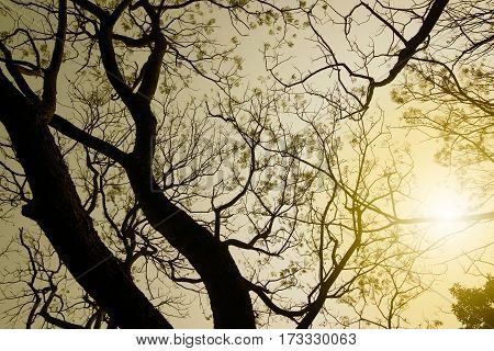 Leafless tree branches of winter season season specific image of nature. Image shot against Sun at Kolkata Calcutta West Bengal India