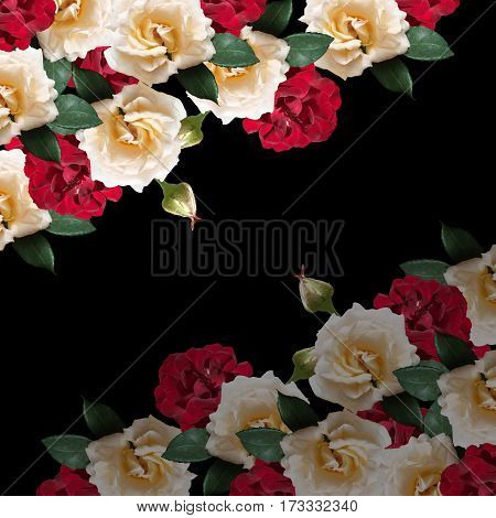 Beautiful floral background of dark red and cream roses
