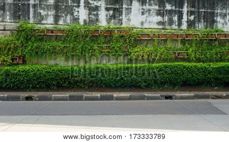 Green vines covering flyover wall at side of the road photo taken in Jakarta Indonesia java