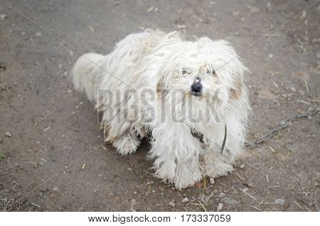 Photos White Shaggy Dog