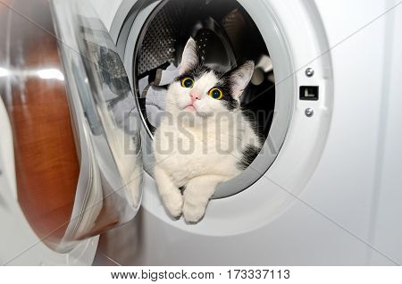The cat is sitting in a washing machine