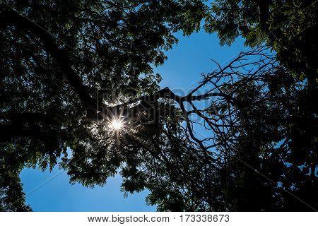 Tree silhouette with sunlight blue sky .