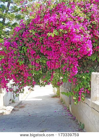 door architecture detail in house building with bougainvillea Greece