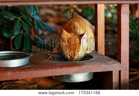 Homeless ginger cat. The cat eats food in a special place for feeding stray animals.