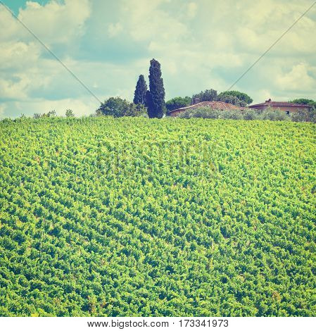 Italian Farmhouse in Tuscany Surrounded by Vineyards Olive Groves and Cypress Alleys Instagram Effect