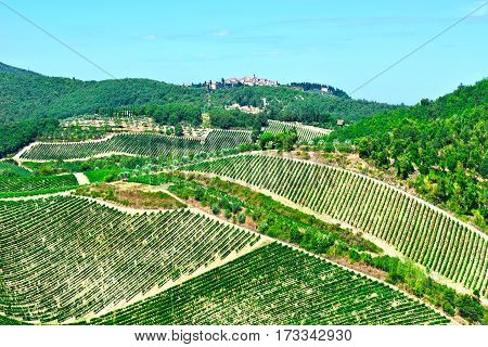 Small Medieval Italian City in Tuscany Surrounded by Vineyards Olive Groves and Cypress Alleys