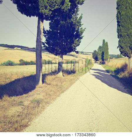 Cypress Alley Leading to the Farmhouse across the Plowed Fields in Tuscany Italy Instagram Effect