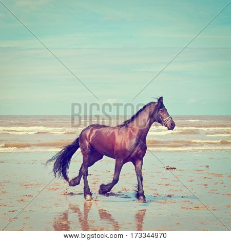Dancing Horse on the North Sea Coast in Zealand in Netherlands Instagram effect