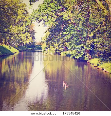 Greenwood on the Canal Bank in the Netherlands Instagram Effect