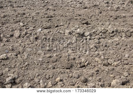 Spring soil land for planting crops of potatoes
