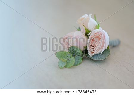 Rose bud in tenderless boutonniere, with green petals, on monotone background, closeup