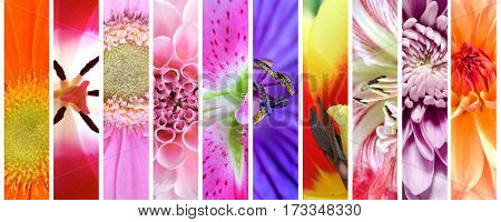 Colorful spring and summer flowers macro panoramic view