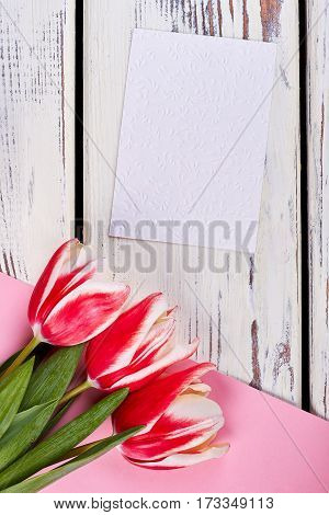 Red tulips and card. Give someone flowers.