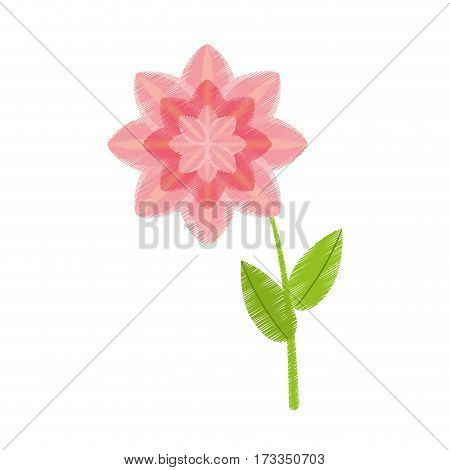 drawing petunia flower nature spring vector illustration eps 10