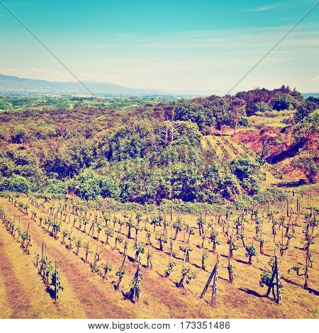 Hills of Tuscany with Vineyards in the Chianti Region Instagram Effect