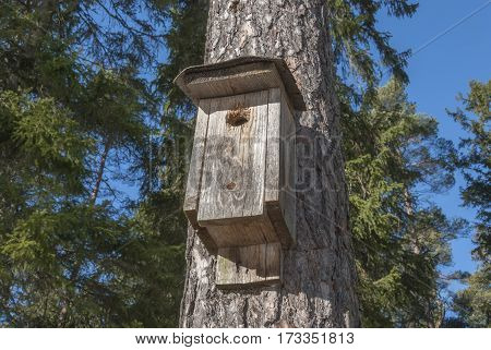 Bird house in pine tree, home for birds