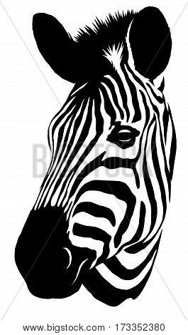 black and white linear draw zebra illustration