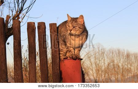 Cat on fence /This is  angry cat in the country.