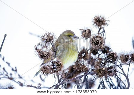 Beautiful small bird sitting on a branch in winter