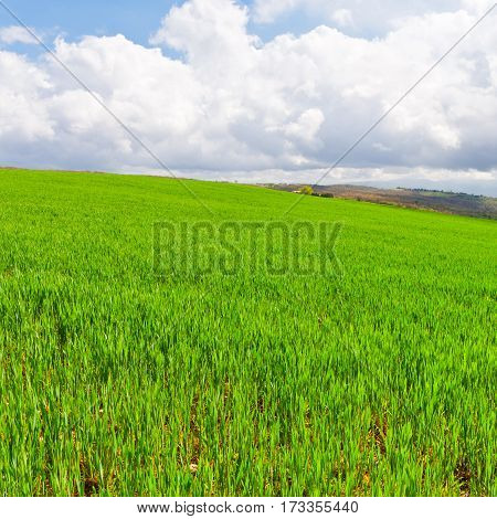 Green Sloping Meadows of Tuscany in Italy