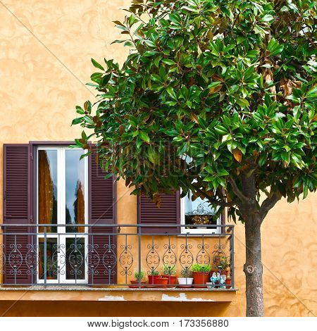 Ornamental Tree on the Background of the Facade of Italian House with Balcony